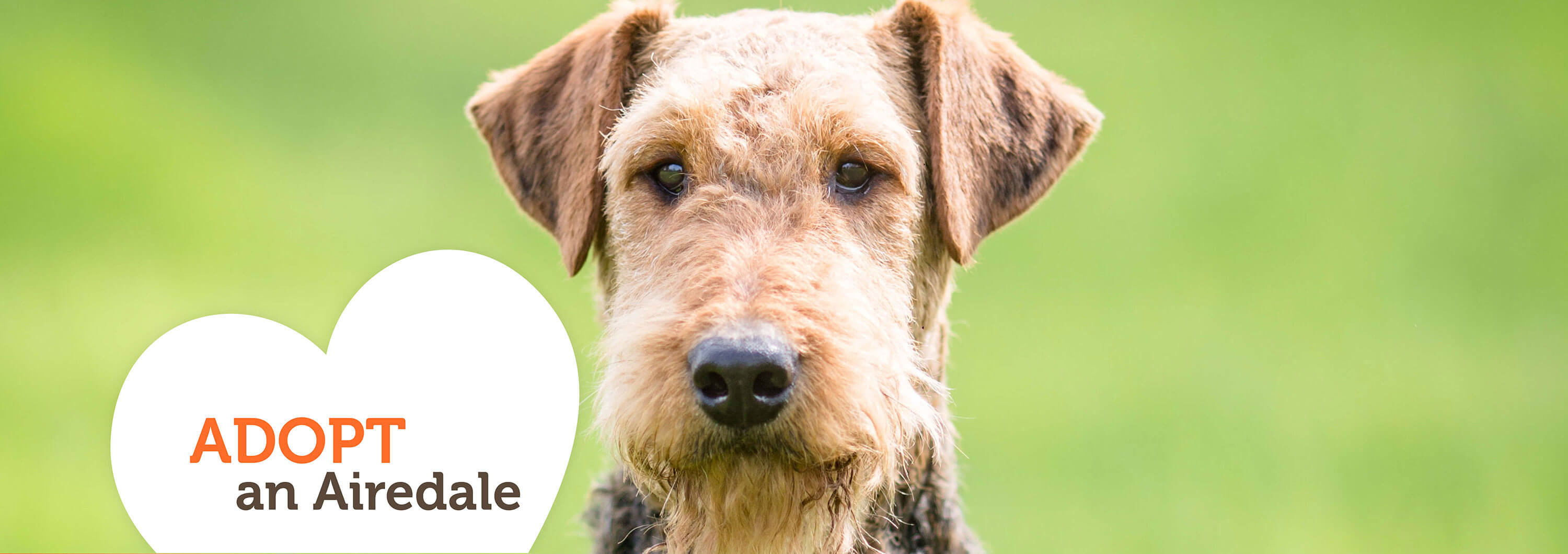 Sunshine Airedalers of Florida – Airedale Rescue Organization